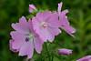 IMG_7728 (Lightcatcher66) Tags: blütenundpflanzen florafauna makros lightcatcher66
