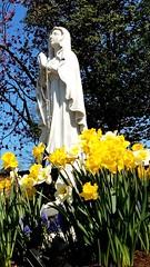 Smile on Saturday - Flowers (jwal900) Tags: smile saturday flowers garden statue catholic mary smileonsaturday springflower20172018