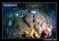 _MG_2087 (Graggs) Tags: blue canon5dmkii diving scuba similanislands thailand uwp underwater underwaterphotography carpetanemone clownfish
