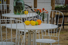 From the Sofiero palace conservatory (frankmh) Tags: fruit orange lemon furniture conservatory sofiero helsingborg skåne sweden