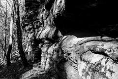 L1001350 (jluebeck) Tags: pfälzerwald forrest wald felsen