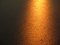 Orange lake (Jenny Beatty) Tags: lake water sunset dusk orange boat aerial serene