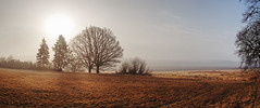 Misty morning (Petr Horak) Tags: bohemia czechrepublic czechia europe firstlight fuji grassland landscape meadow nature outdoor sky tree x100f pano panorama mist foggy fog