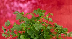 Cilantro. (annick vanderschelden) Tags: cilantro green red herb lighteffect coriandrumsativum chineseparsley apiaceae food ingredient leasves