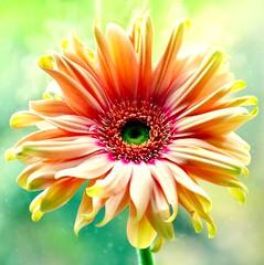 Divine Perfection (barbara_donders) Tags: natuur nature spring lente bloem flower perfectie magical beautifull beauty mooi prachtig colorfull kleurrijk bokeh macro