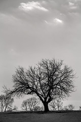 Stark Tree-B&W 3-0 F LR 3-10-118 J013 (sunspotimages) Tags: trees tree monochrome blackandwhite blackwhite bw nature landscape