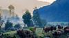 Vacas / Cows (López Pablo) Tags: cow fog green grass tree way saint james2 nikon d7200 leon spain