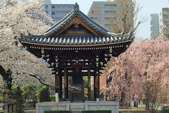 The Temple of Cherry Blossom (seiji2012) Tags: 鐘楼 桜 枝垂桜 文京区 kichijyoujitemple belltower bunkyou komagome 駒込