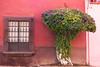 Le printemps en Février... (dominiquita52) Tags: mexico façade arbre tree window fenêtre sanmigueldeallende méxico bougainvilliers