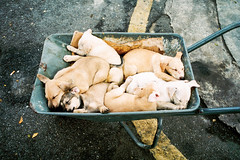 Zzzzzzzzzzzzzzz (Yeow8) Tags: nikon28ti agfavista400 nikoncommunity agfa dog dogs puppies doggies animal filmphotography filmisnotdead filmphoto ishootfilm filmphotographer colorfilmphoto pudu kualalumpur malaysia