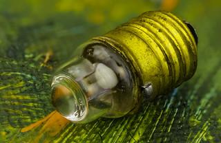 Pea Torch Bulb