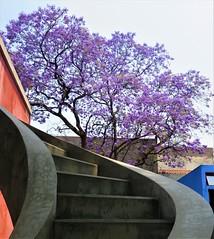 House and studio - Diego Rivera and Frida Kahlo (Architourist2day) Tags: architecture diego frida gorman mexico rivera kahlo