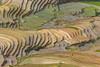 File530.0617.Trồng Tồng.Lìm Mông.Cao Phạ.Mù Cang Chải.Yên Bái (hoanglongphoto) Tags: asia asian vietnam northvietnam northwestvietnam landscape scenery vietnamlandscape vietnamscenery vietnamscene mucangchailandscape terraces terracedfields valley limmongvalley transplantingseason sowingseeds curve terracedfieldsinvietnam canon canoneos1dx canonef500mmf4lisiiusm tâybắc yênbái mùcangchải caophạ lìmmông thunglũnglìmmông phongcảnh ruộngbậcthang ruộngbậcthangmùcangchải đổnước mùacấy mùcangchảimùacấy đườngcong trừutượng abstract trồngtồng