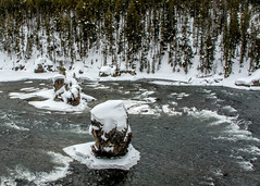 Yellowstone NP Trip - Day 4 (118) (tommaync) Tags: yellowstone yellowstonenationalpark yellowstonenp park national february 2018 wyoming nikon d7500 nature yellowstoneupperfalls upstream snow water ice river