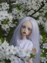 mirabelles (frigida66) Tags: bjd dollchateau