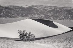 20180316_Death_Valley_008 (petamini_pix) Tags: california deathvalley desert mesquitedunes deathvalleynationalpark dune sanddune pattern shadow shape plant shrub mountains landscape blackandwhite blackwhite bw monochrome grayscale