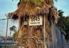 Palm address (ADMurr) Tags: la hollywood fence parking lot mexican fan palm leica m6 50mm summicron kodak 200 ccc860
