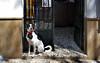 Spain: Granada, Albaicín dog (Henk Binnendijk) Tags: granada andalucia andalucía andalusia spain spanje españa albaicín albayzín dog hond chien perro