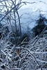 Icy Branches during a Freezing Rain in Hagerstown Maryland (PhotosToArtByMike) Tags: icestorm freezingrain hagerstownmaryland hagerstown maryland md ice precipitation snow appalachianmountains washingtoncounty westernmaryland