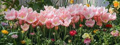 The Spring Collection (Note-ables by Lynn) Tags: flowers springblooms garden bouquet royalbotanicalgardens pinktulips