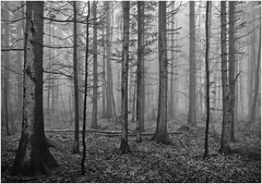 amidst the dark and foggy forest (kurtwolf303) Tags: laub leaves fog foggy forest woods trees bäume natur nature hohewand austria österreich outdoor olympusem1 omd microfourthirds micro43 systemcamera mirrorlesscamera mft kurtwolf303 spooky unheimlich landscape landschaft scenery nebel nebelig niederösterreich spiegellos monochrome bw sw