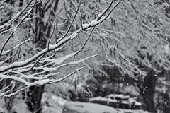 Snowflake (sdupimages) Tags: noirblanc blackwhite bw nb tree arbres bokeh mbt hmbt snowflake snow neige flocons winter hiver nature