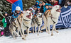 German Champions 4 Dogs RR (ラルフ - Ralf RKLFoto) Tags: frauenwald german championships sleddog sleddograce schlittenhunderennen deutschemeisterschaft dog snow hund husky 1st fast