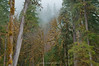 Rainy Forest Day (jamesdelbertanderson) Tags: bakerrivertrail forest cascades northcascades mtbakersnoqualmienationalforest mountbakersnoqualmienationalforest washington