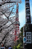 Happy Spring Towers (sapphire_rouge) Tags: sakura 花見 桜 cherryblossom 春 zojoji temple tokyotower 東京タワー 増上寺