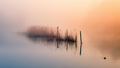 early morning (tvdijk19) Tags: fog landscape nature breathtakinglandscapes flevoland netherlands bird nr17 mist misty lake water colors travel fujixt2 xf50140mmf28