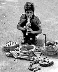 Snake charmer's dangerous game (gerard eder) Tags: world travel reise viajes asia southasia india agra people peopleoftheworld animals tiere animales snake cobra snakecharmer städte street stadtlandschaft streetlife streetart city ciudades cityscape cityview urban urbanlife urbanview outdoor blackandwhite blackwhite blancoynegro bw sw monochrome