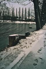 (davidkříž) Tags: nature pond snow winter back christmas czech czechrepublik photography trip way unknown tracks tree stumps