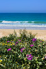 IMG_2204-1 (Andre56154) Tags: spanien spain espana andalusien andalusia küste coast ozean ocean meer strand beach wasser water blume flower blüte blossom pflanze sky