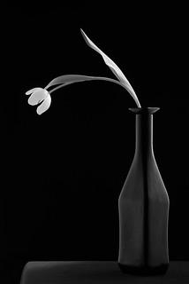 Black Vase With Tulip #4