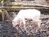 WildPark Schloss Tambach (lichtenfels24_photography) Tags: wolf luchs reh hirsch storch adler falke geier otter waschbär pony