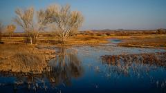 Golden Hour at the Bosque (San Francisco Gal) Tags: bosquedelapache water cottonwood grass reflection bird mountain goldenhour newmexico nm ngc npc