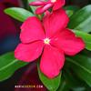 9530-i (mariasherow) Tags: bigisland hawaii