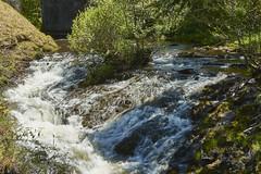 Torrent de montagne ( photopade (Nikonist)) Tags: nature torent montagne eau végétation verdure nikond7100 nikon afsdxvrzoomnikkor1685mmf3556ged affinityphoto imac apple