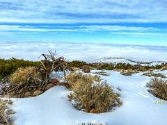 Nevada (etoma/emiliogmiguez) Tags: tenerife islascanarias parquenacionaldelteide mardenubes retamas nieve
