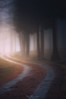 Path in the forest (Mimadeo) Tags: forest dark fog trees tree foggy path misty mist trunk trunks landscape light mystery mysterious ethereal darkness gloomy pathway footpath road countryroad lane saldropo shadow mood atmosphere atmospheric moody sunshine sunlight