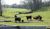 20180406-OSEC-LSC-0396 (USDAgov) Tags: highschoolfarm arnett perdue tour cattle dairycattle milkcow rv