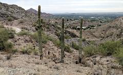 Piestewa Peak Trails Phoenix AZ 103517 (bobistraveling) Tags: phoenix scottsdale art museum az