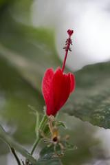 2W0A0843.jpg (Johanna Barton) Tags: ometepe flora nicaragua nature departamentoderivas ni