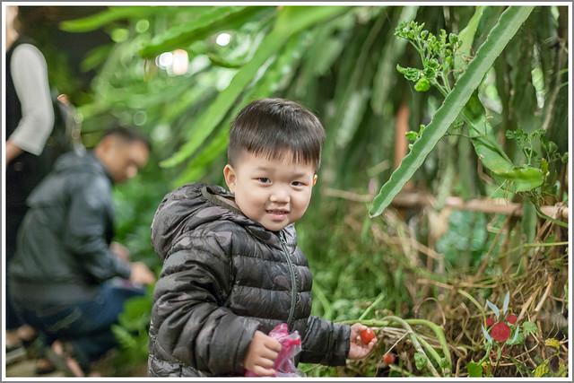 火龍果園星光野餐Ⅱ 找地瓜 烤地瓜 吃地瓜 (25)