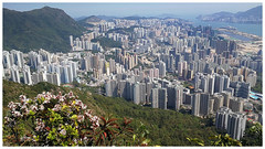 獅子山下的九龍 The view of Kowloon from Lion Rock (Alice 2018) Tags: spring architecture building huawei leica p9 mhal29 mobile huaweimate9 mate9 hongkong 2018 green asia city flower hike nature park hill aatvl01