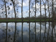(nic0v0dka) Tags: rio water spiegel mirror miroir reflection reflet campagne rural balade aquitaine deuxsevres iphone france river