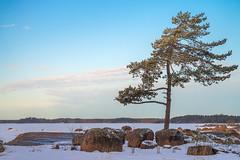 Morning at Matinsaari (Jyrki Salmi) Tags: jyrki salmi matinsaari hamina finland morning light tree blue sky snow ice