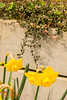 Spring Flowers (SLHPhotography1990) Tags: flowers garden uk freshwater isleofwight leaf leaves spring colour vibrant