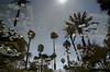 the garden of Yves Saint Laurent (M00k) Tags: marokko marrakech majorelle gardens yvessaintlaurent pond fish bonusturtle