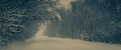 Endless Winter (William Flowers) Tags: winter snow trees storm winterstorm snowing